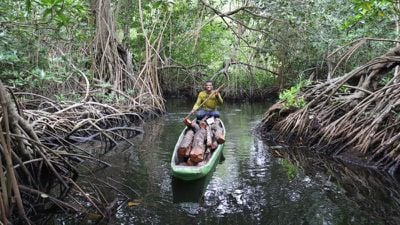 1 apple is investing in a huge mangrove forest in columbia