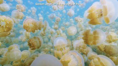jellyfishscreensaver
