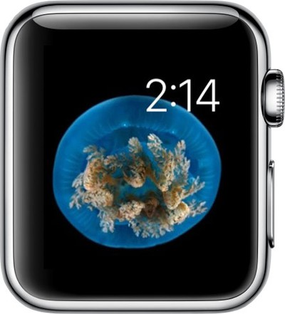 Watch Face on Apple Watch