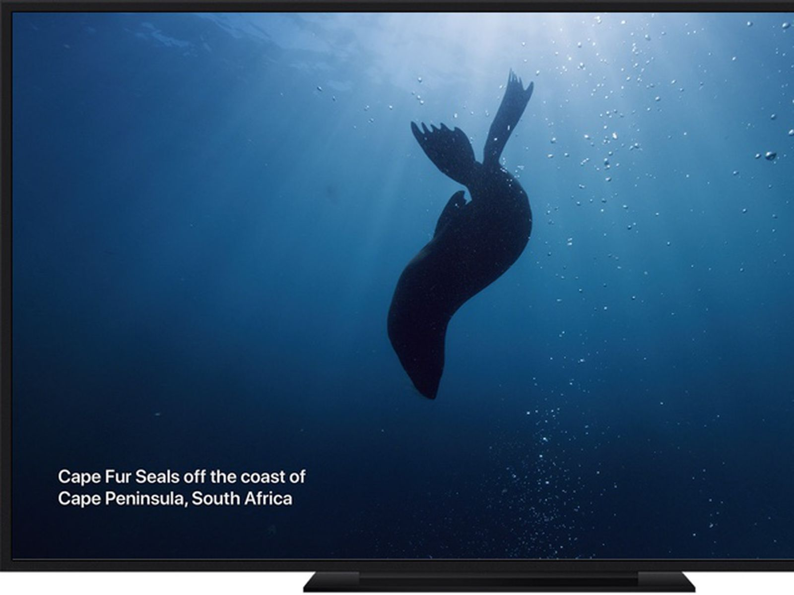 New Under The Sea Themed Screen Savers Now Available On Apple Tv In Tvos 13 Macrumors