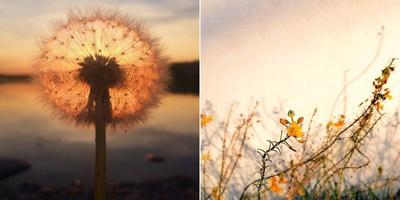 ippaawardssunsetflower