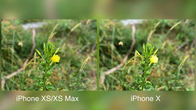 iphonexsmaxportraitmodeplant