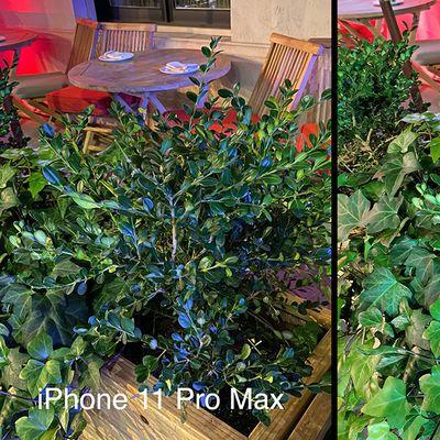 promaxnote10plant