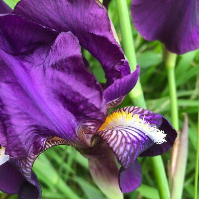 iphone 8 iris photo