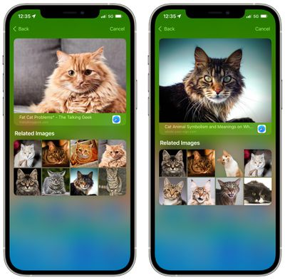 ios 15 spotlight images search 2