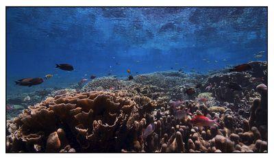 tvos 13 underwater